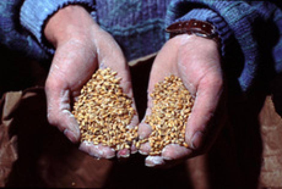 Semences paysannes : « Une première victoire syndicale »